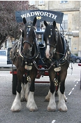 Wadworths Shire Horses in Devizes